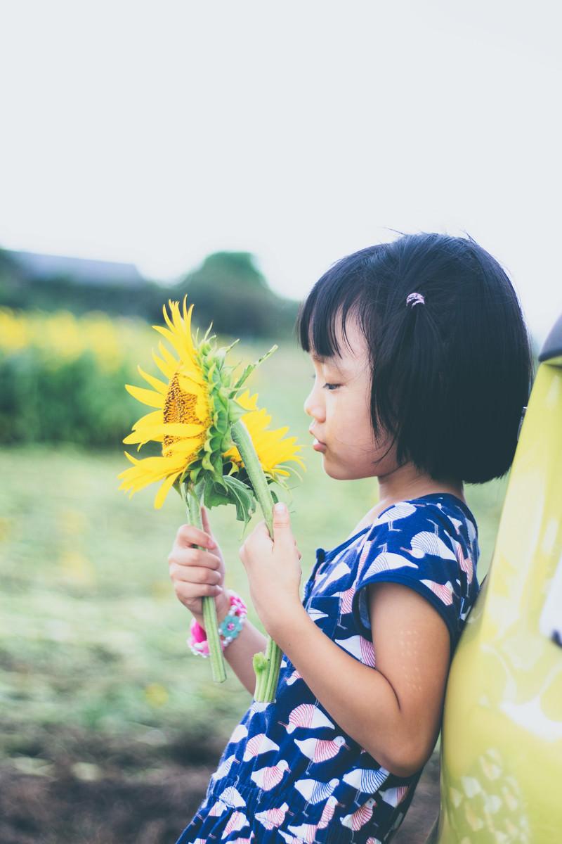 「向日葵と幼い女の子向日葵と幼い女の子」[モデル:あんじゅ]のフリー写真素材を拡大