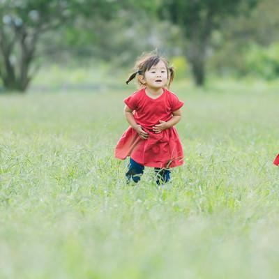 「原っぱと双子の女児」の写真素材