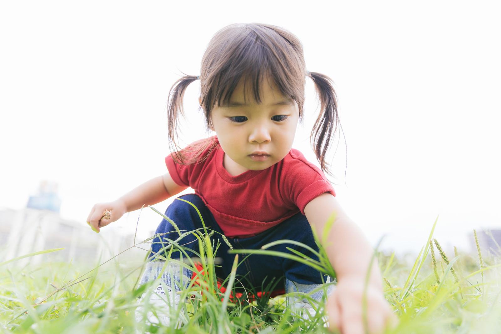 「公園でお花を摘むツインテ女児」の写真[モデル:あおみどり]