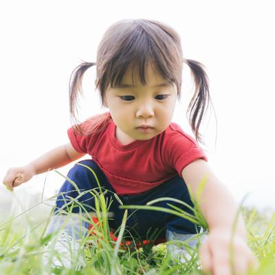 「公園でお花を摘むツインテ女児」の写真素材