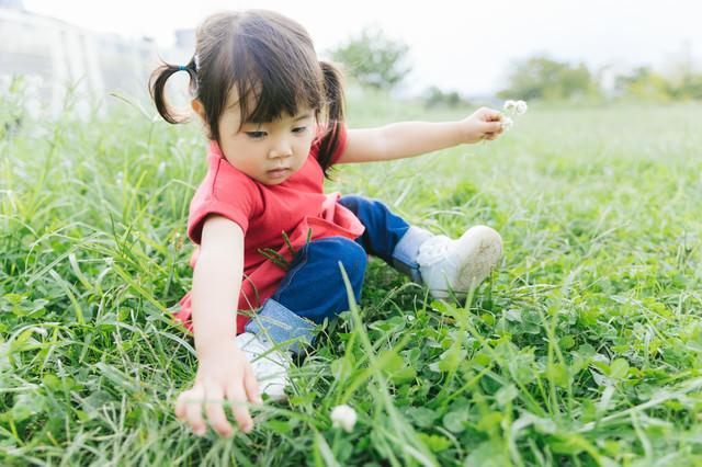 シロツメクサを集める女の子の写真