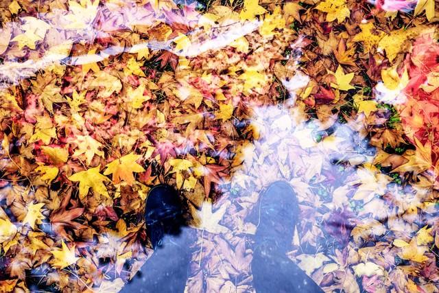 落ち葉と足元の写真