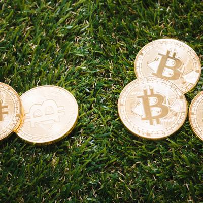 草コインの写真