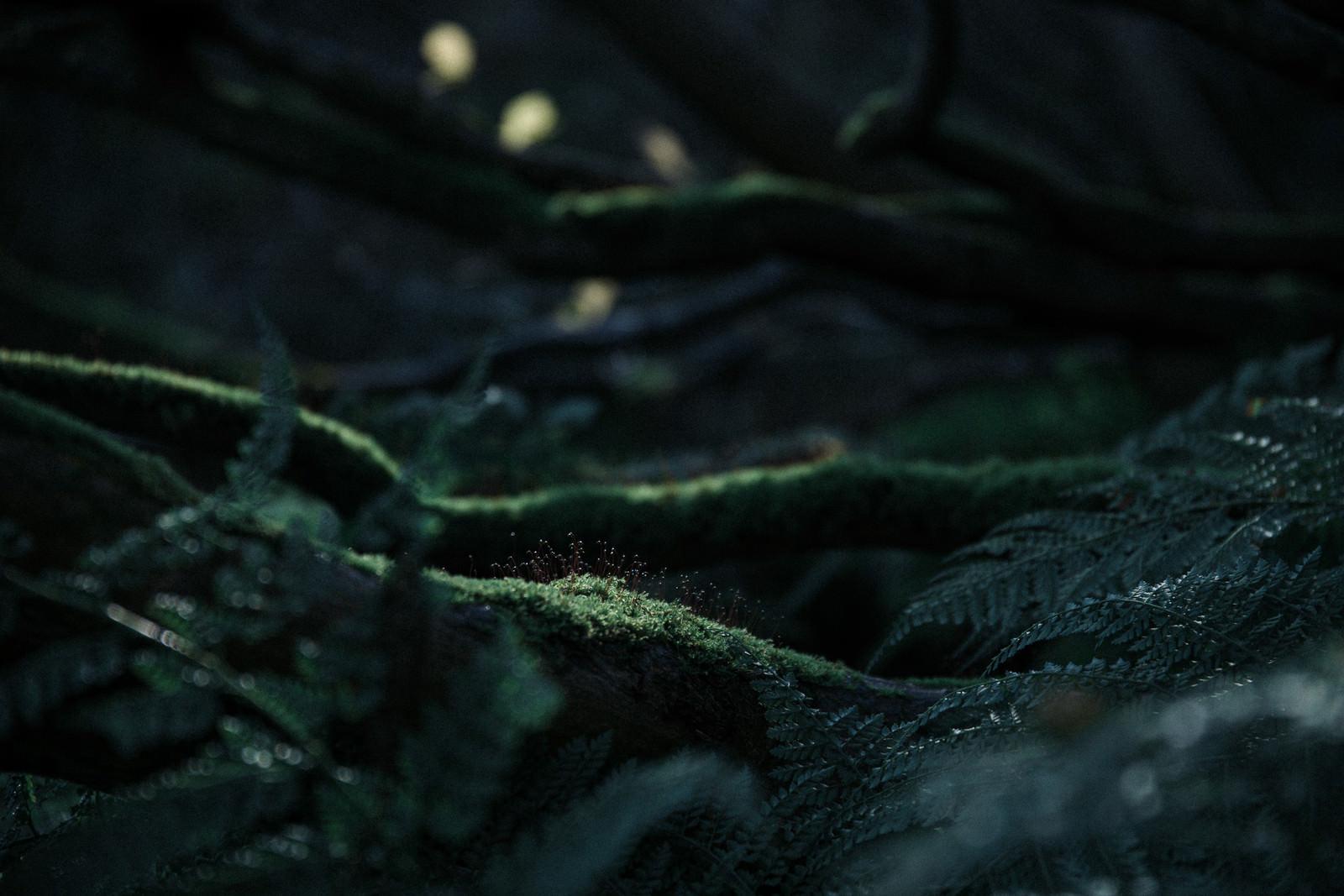 「光が差し込む小さな植物」の写真