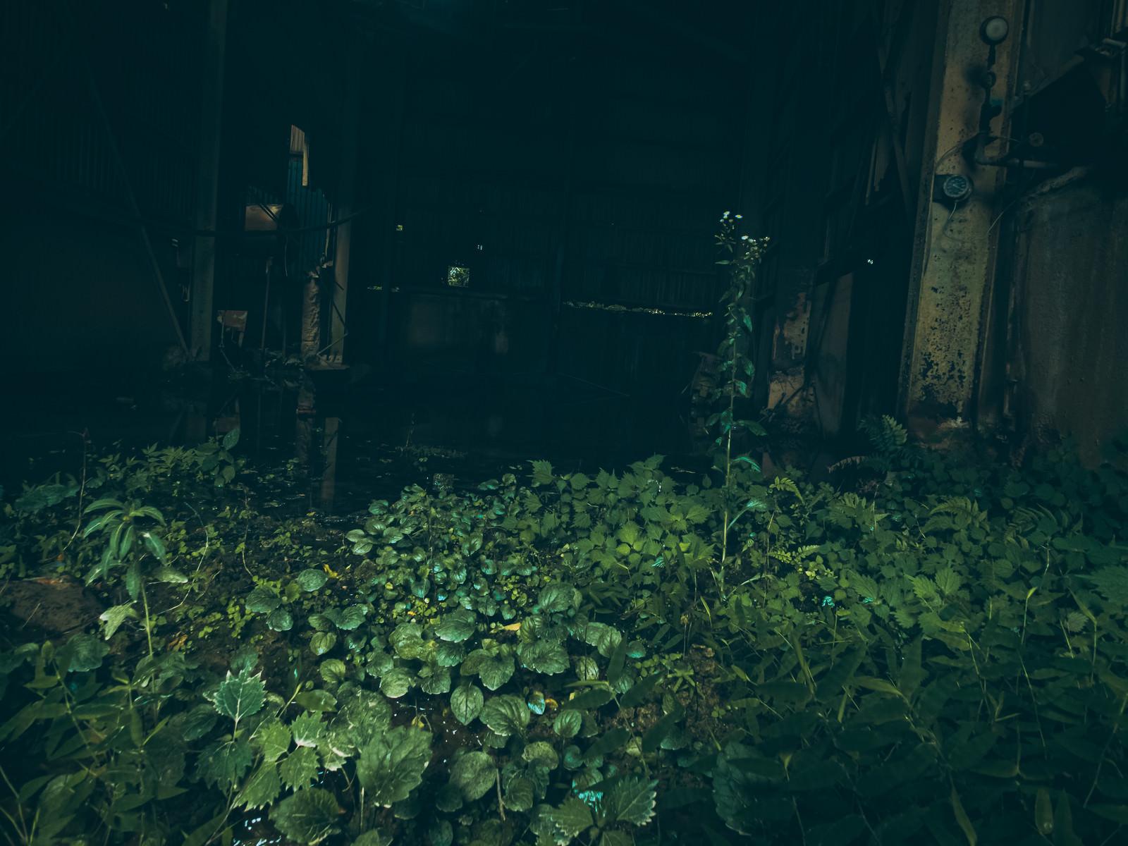 「薄暗い不気味な粘土工場跡」の写真