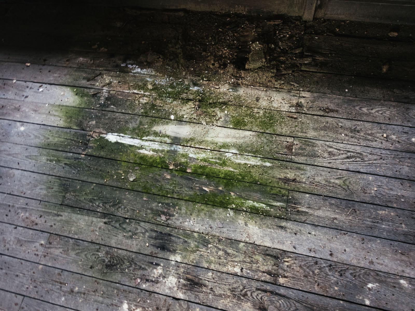 「廃校の苔生す廊下のシミ」の写真