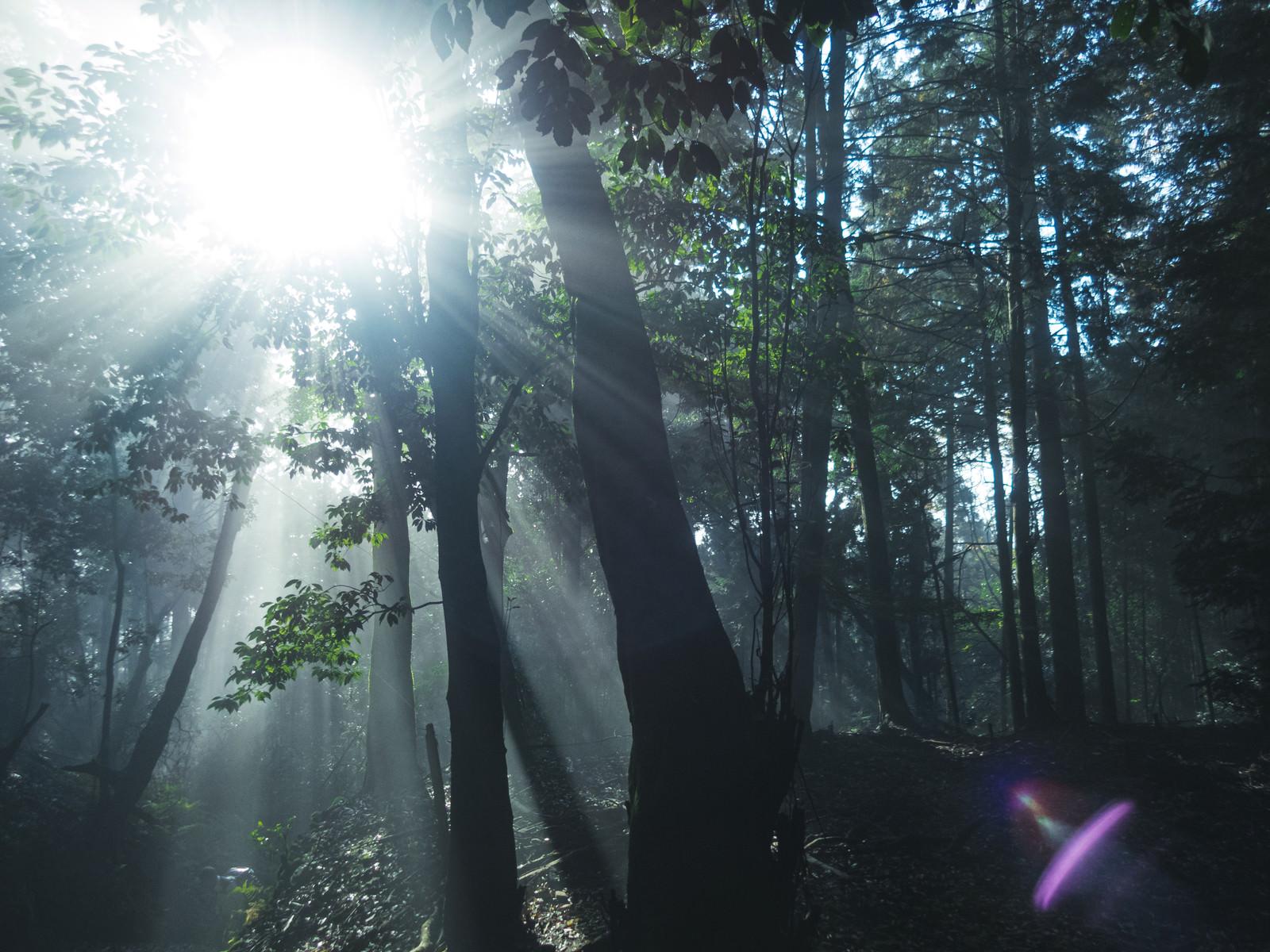 「森林に差し込む光芒」の写真