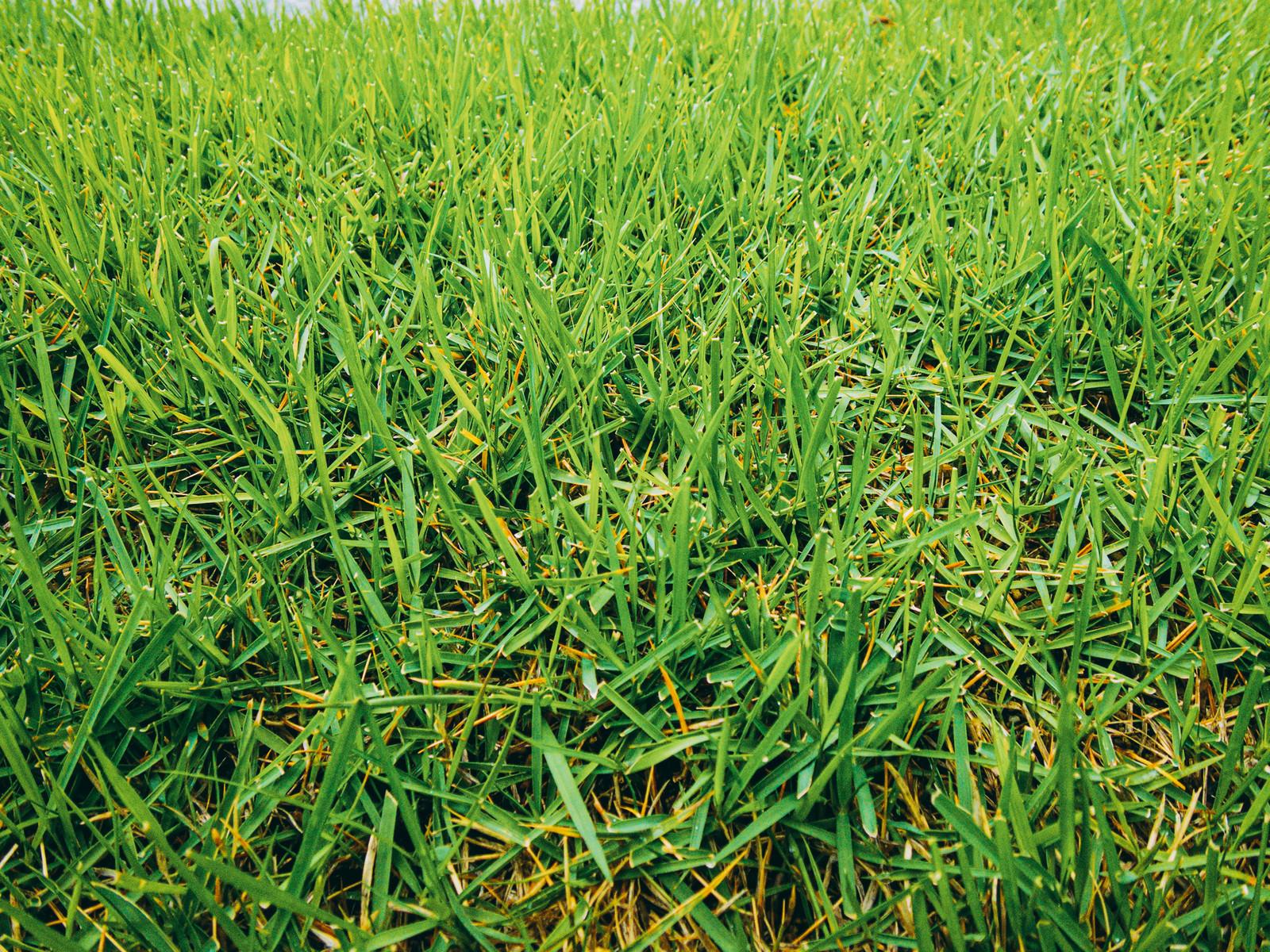 「雨が降った後の芝生」の写真