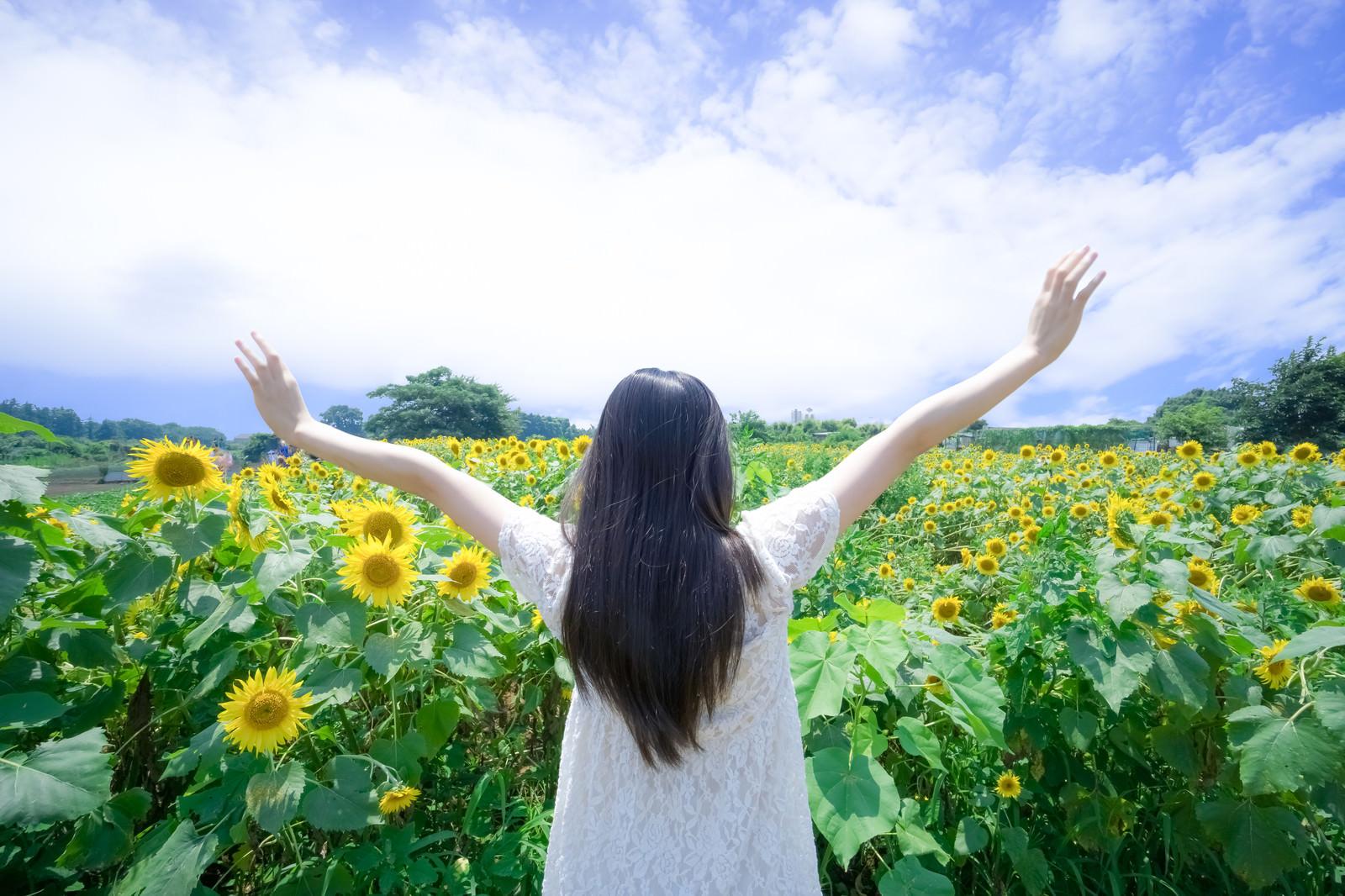 「夏到来!ひまわりヤッホー」の写真