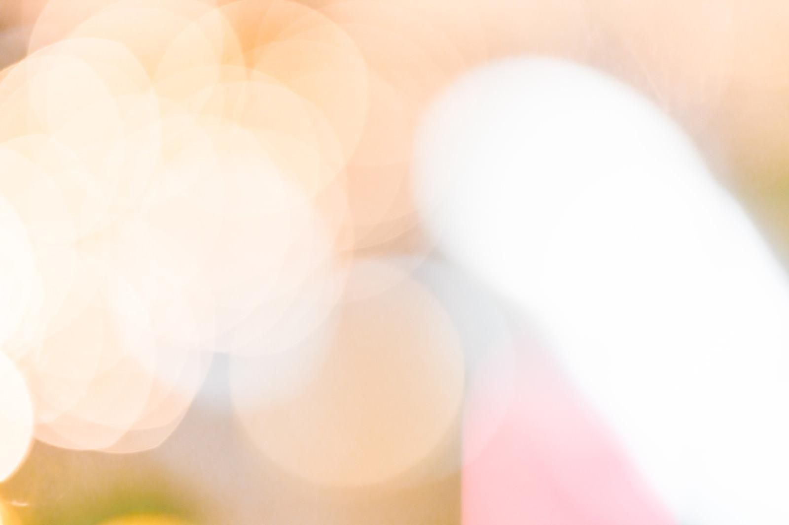 「光あふれる温かみのあるボケ味」の写真