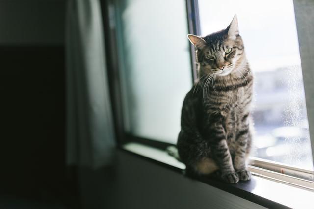 窓際で日向ぼっこ猫の写真
