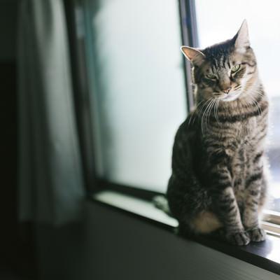 「窓際で日向ぼっこ猫」の写真素材