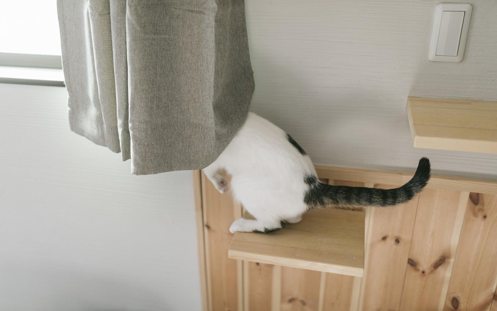 「外の様子が気になる猫ちゃん」の写真