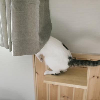 「外の様子が気になる猫ちゃん」の写真素材