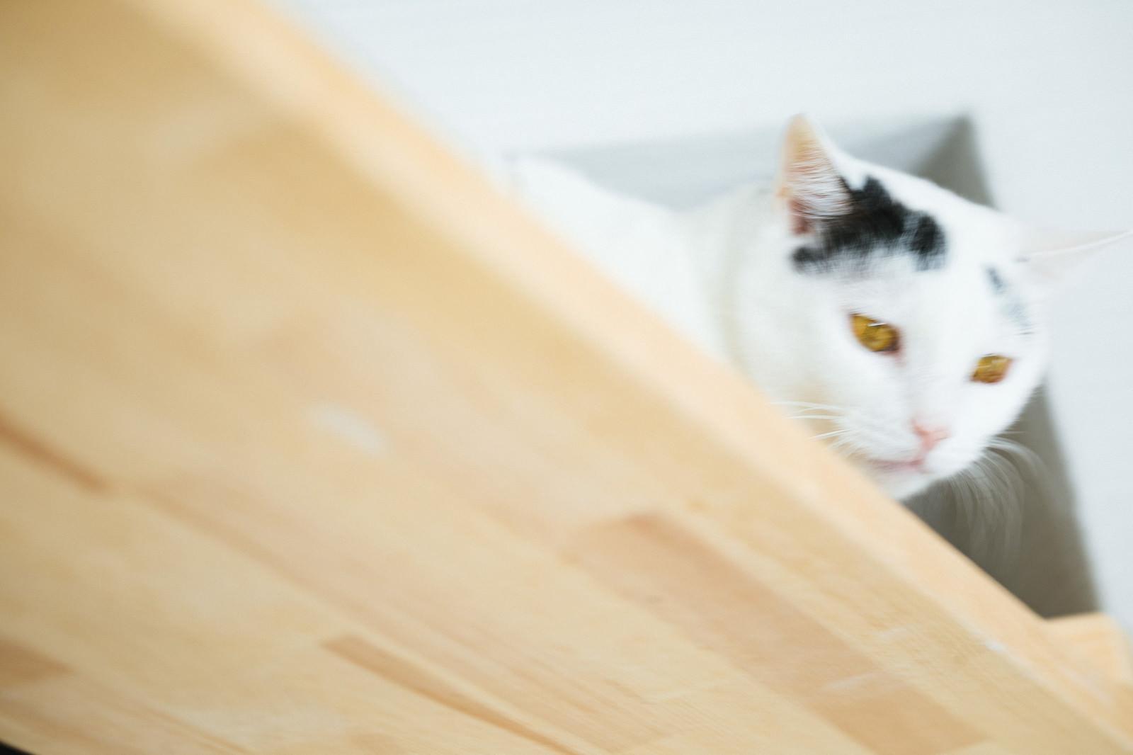 「猫監視システム」の写真