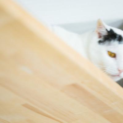 「猫監視システム」の写真素材