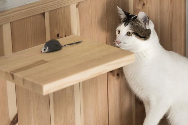 ネズミのおもちゃに釣られる猫の写真