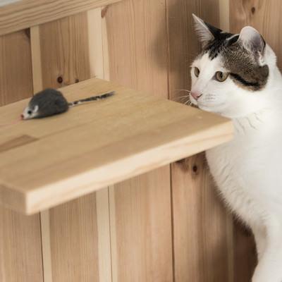 「ネズミのおもちゃに釣られる猫」の写真素材