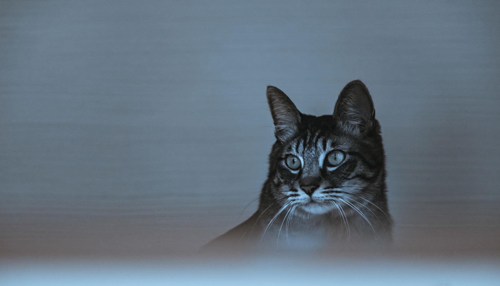「暗がり猫」の写真