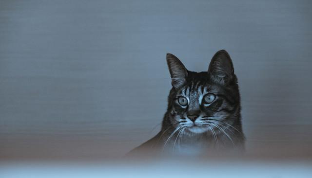 暗がり猫の写真
