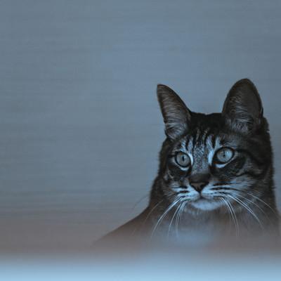 「暗がり猫」の写真素材