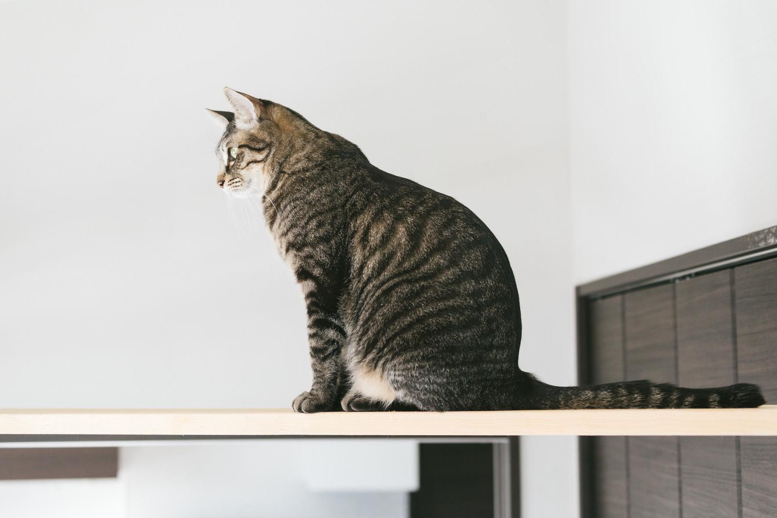 「キャットウォークでお座り猫」の写真