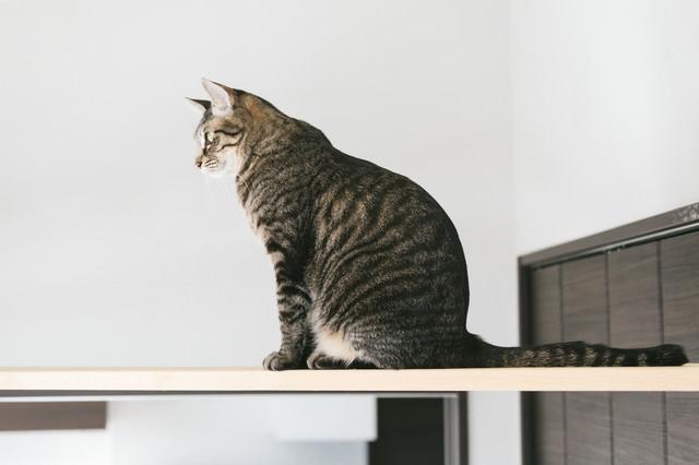 キャットウォークでお座り猫の写真