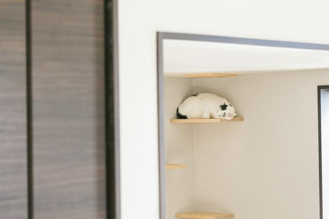 キャットウォークですやすや眠る猫の写真