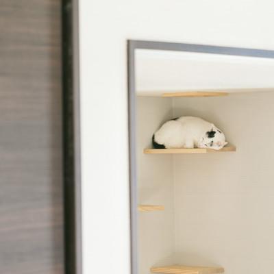 「キャットウォークですやすや眠る猫」の写真素材