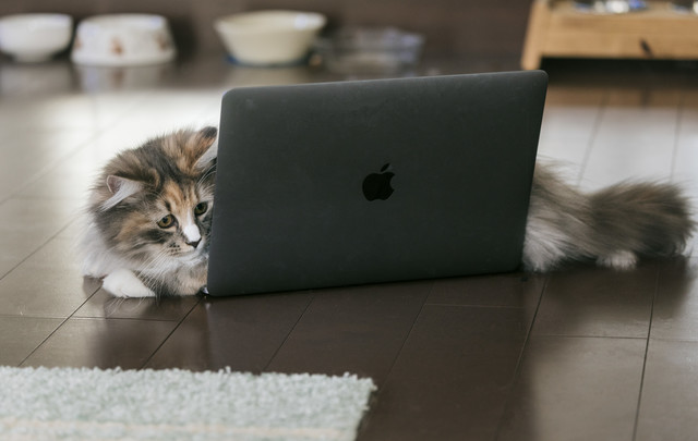 MacBookの上に横たわる猫の写真