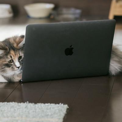 「MacBookの上に横たわる猫」の写真素材