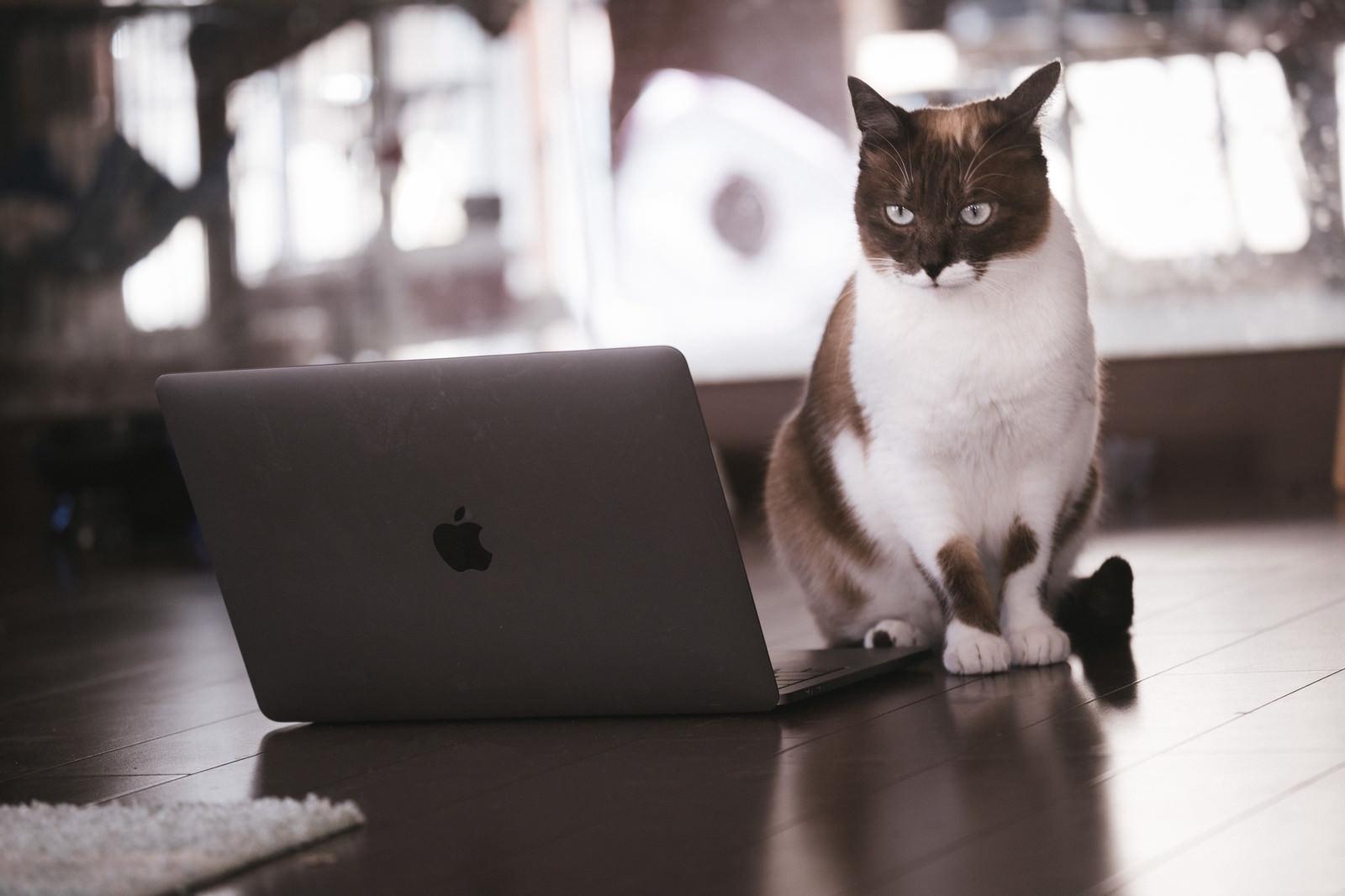 「解読困難なコードに頭を悩ませる猫エンジニア解読困難なコードに頭を悩ませる猫エンジニア」のフリー写真素材を拡大