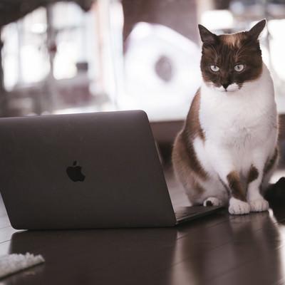 「解読困難なコードに頭を悩ませる猫エンジニア」の写真素材