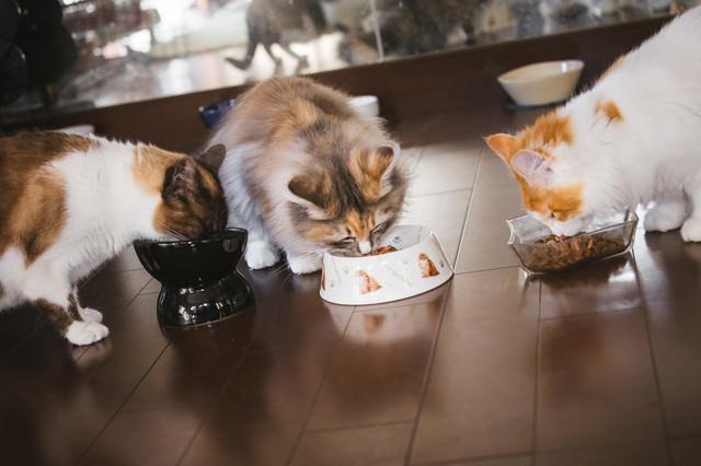 猫たちのご飯タイムの写真