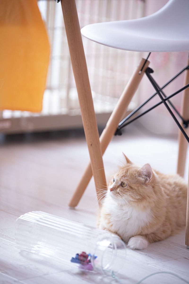 「デスクの下でくつろぐ猫ちゃん」の写真