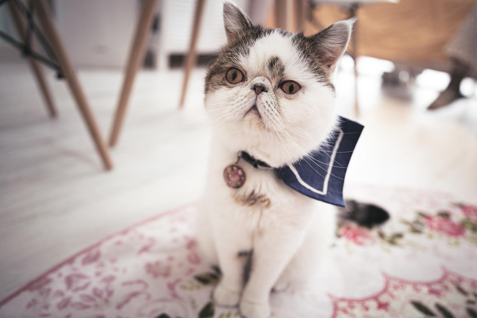 「信じるか信じないかはあなた次第ですと告げられた猫」の写真
