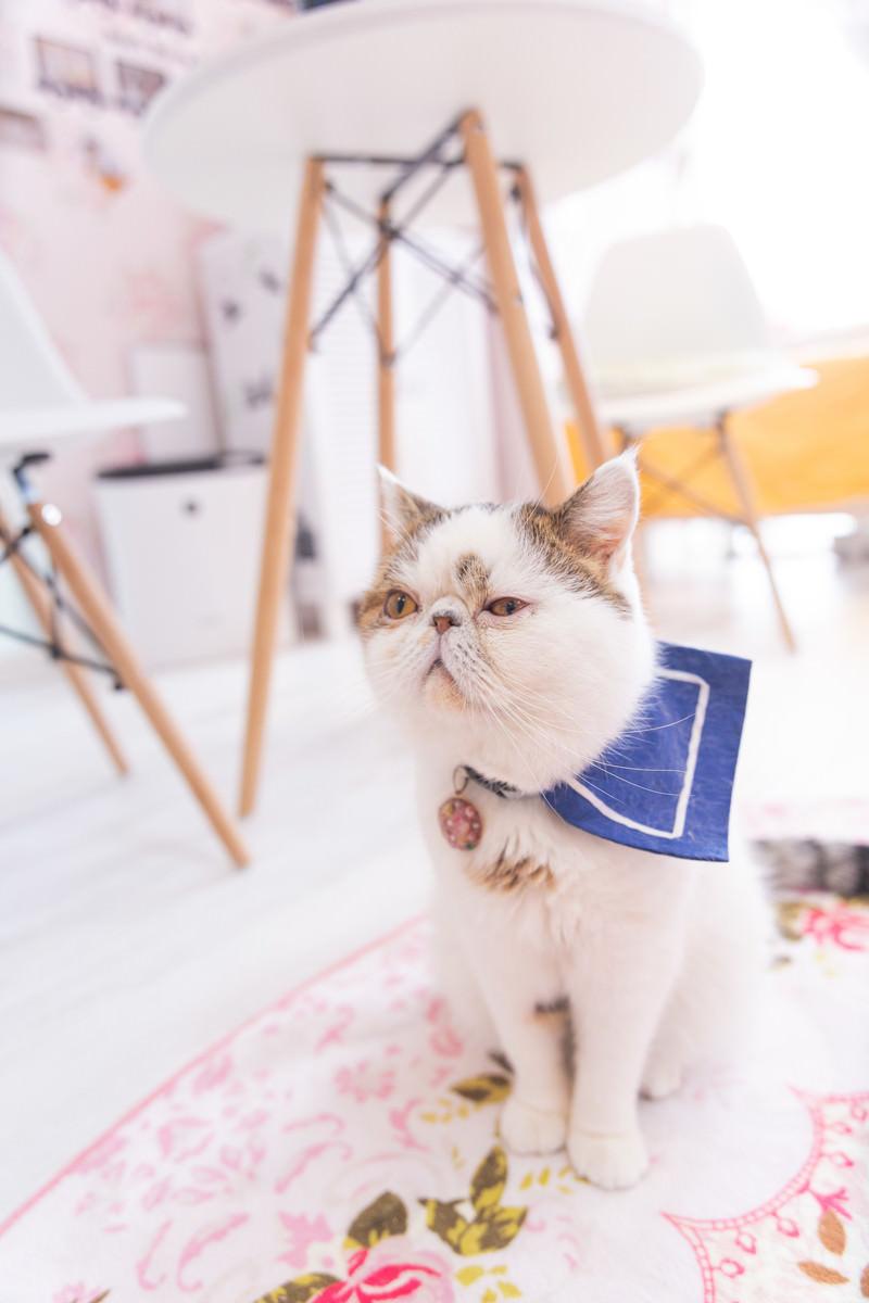 「無関心を装い気になってしまう様子(猫)」の写真