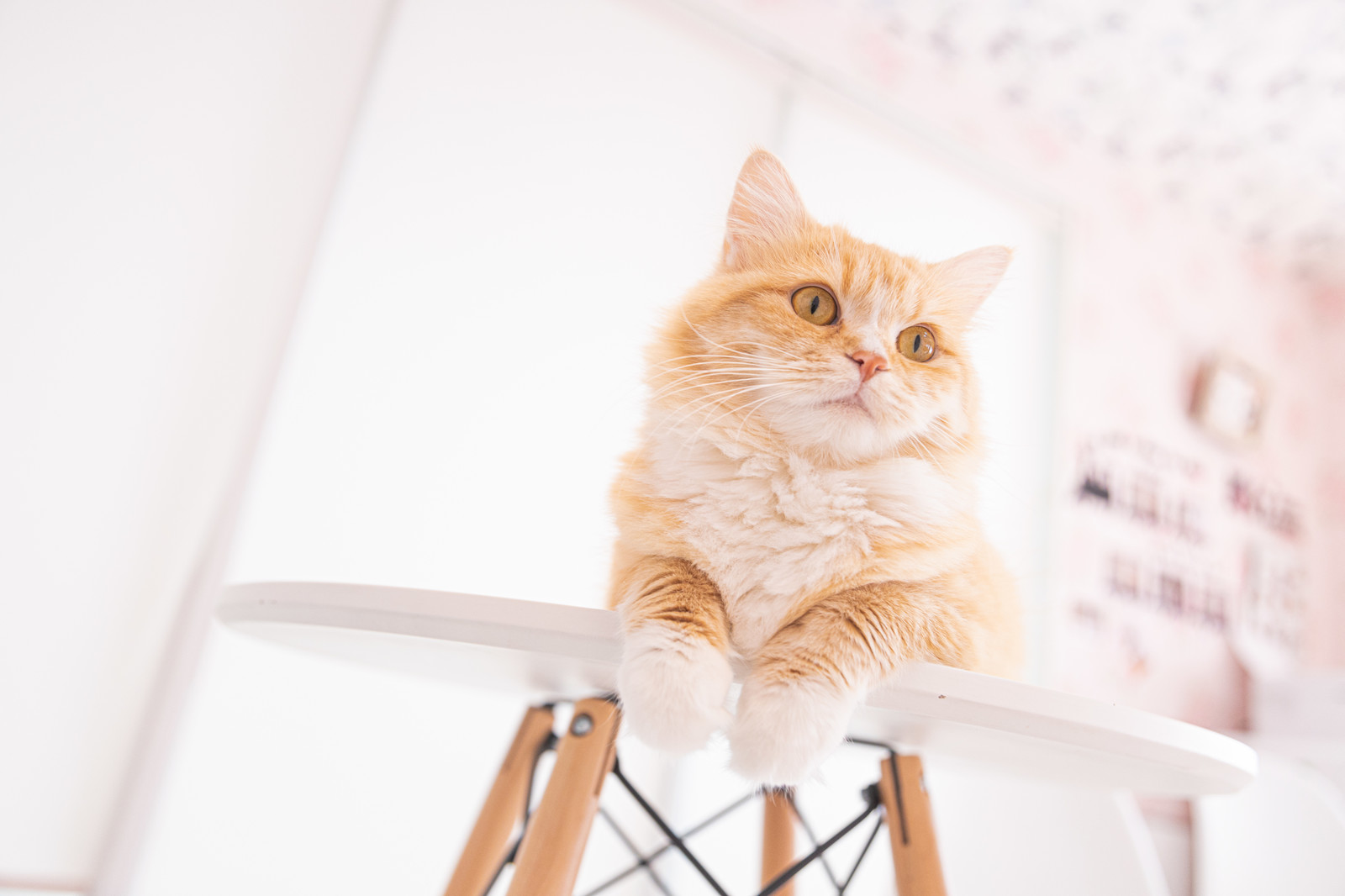 「キョトンと辺りを見回す猫」の写真