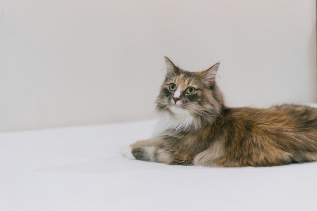 少しだけ興味ある猫の写真
