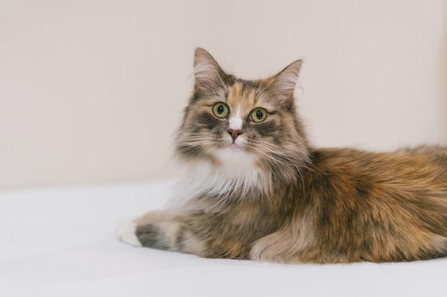 様子をうかがう猫ちゃんの写真