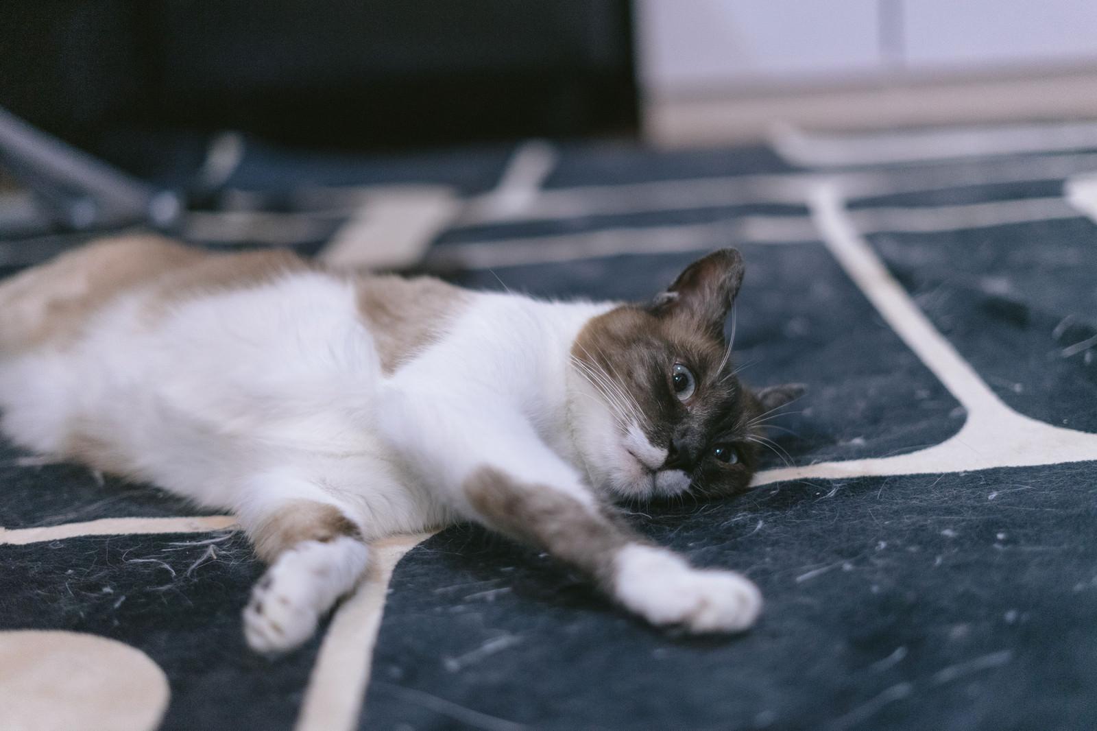 「猫だけど文句ある?」の写真