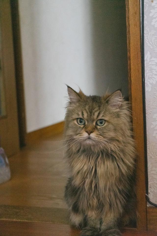餌がもらえると聞いて(猫)の写真