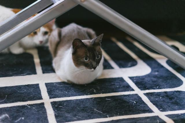 餌待ちの猫たちの写真