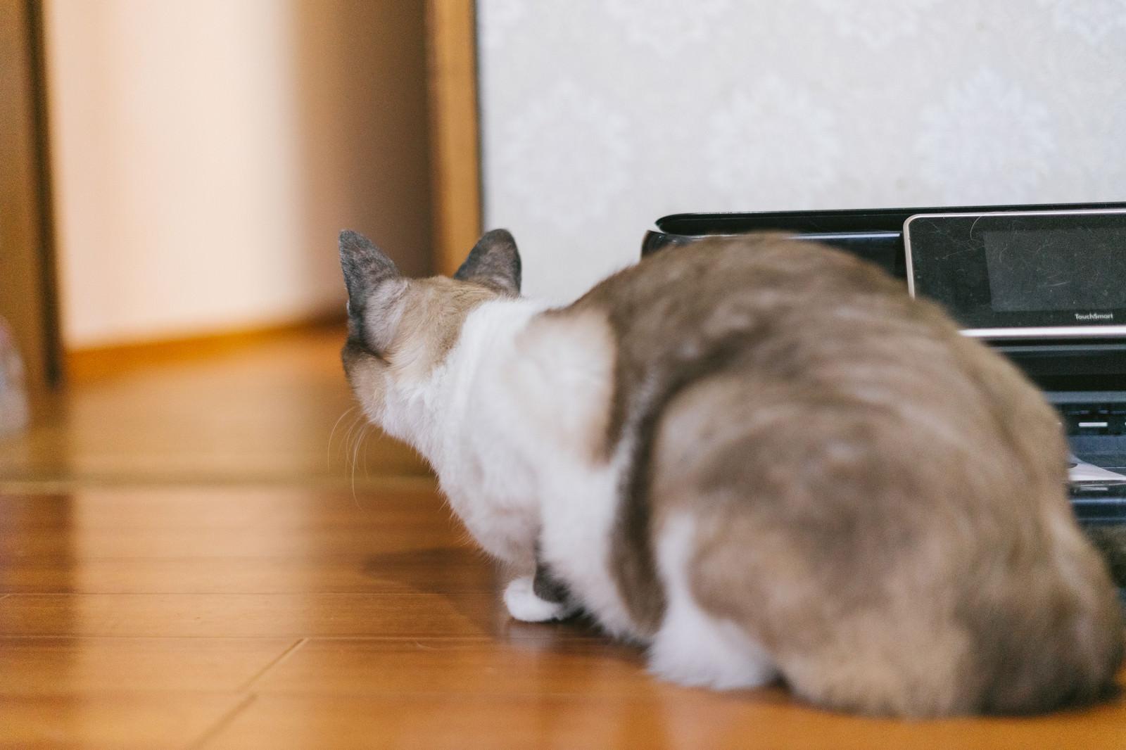 「隣の部屋の様子が気になる猫」の写真