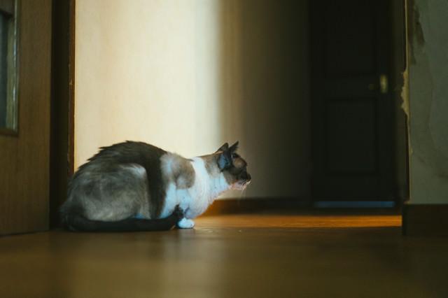 出待ち猫の写真