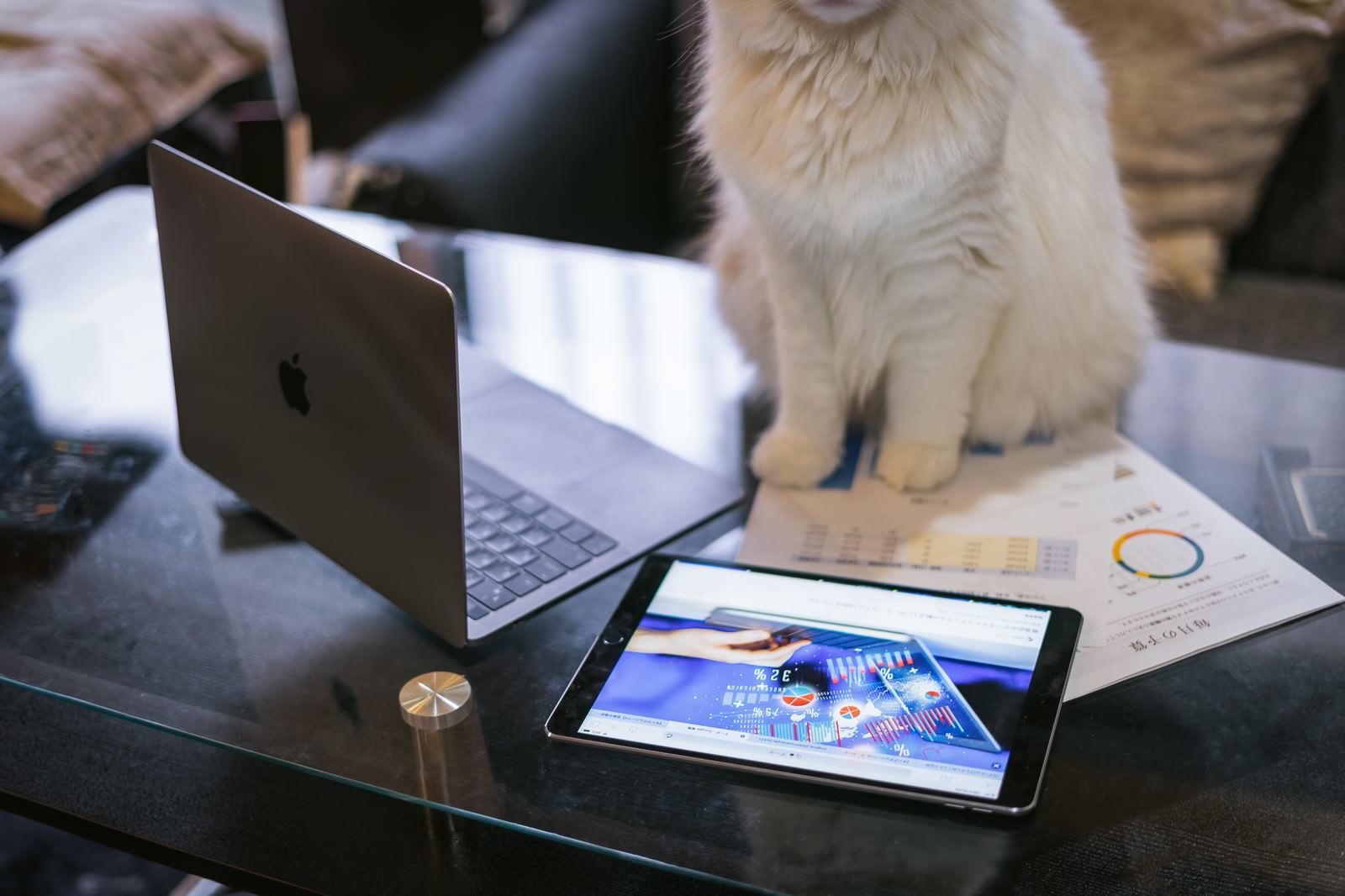 「予算に餌代が含まれていないと不服の猫部長」の写真