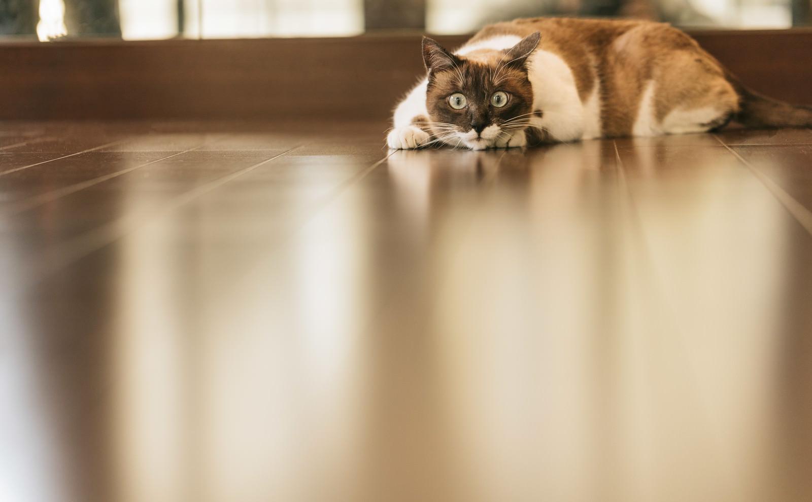 「獲物を狙う猫」の写真