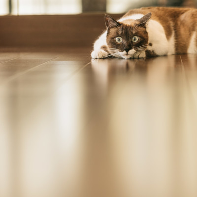「獲物を狙う猫」の写真素材