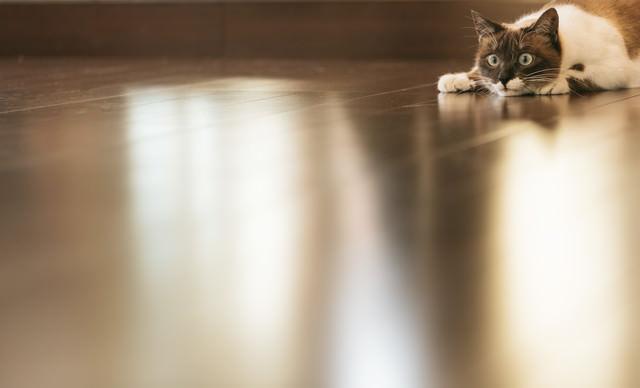 フローリングと猫の写真