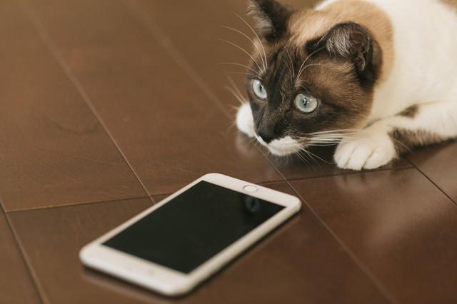 スマホの指紋認証に失敗する猫の写真